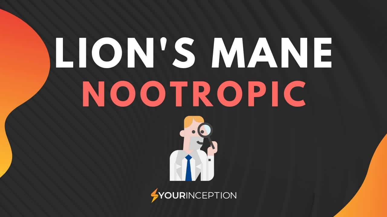 lion's mane nootropic