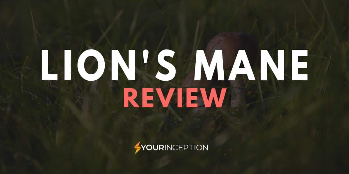 lion's mane review